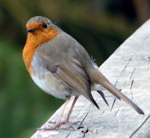 Punarinta Cornwallissa