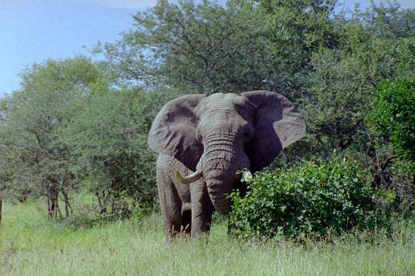 Etela-Afrikka ja Swazimaa