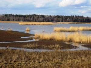 4. sija ikäryhmäni naisissa Suomessa maabongarina