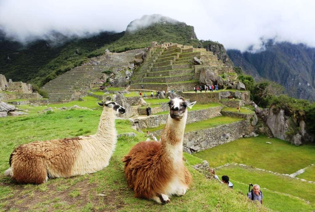 Laamoja Machu Picchulla