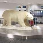 Jääkarhujen saarilla
