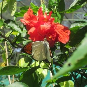 Kuala Lumpur Butterfly Park Malesia