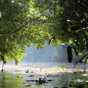 Kinabatang river Sabah Malaysia