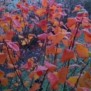 Autumn frost Espoo