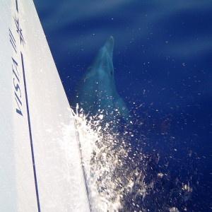 Delfiini Kreikka