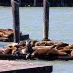 San Franciscon merileijonat