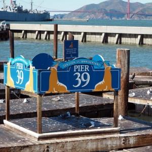 San Francisco sea lions merileijonat