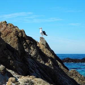 17-Mile Drive Bird Rock