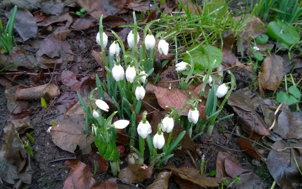 Lumi suli Iirislahdessa 2.3.2015