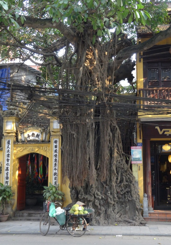 Hanoi Hang Gai puu