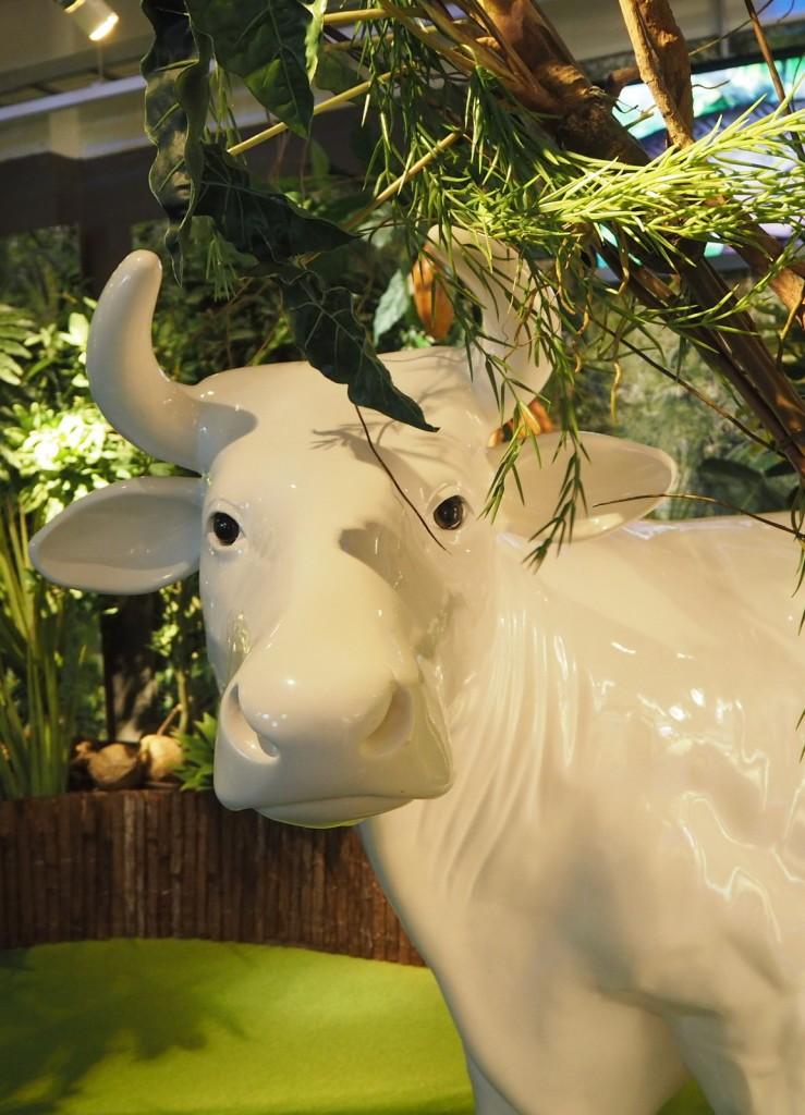 Fazerilan lehmä - suklaaseen tarvitaan maitoa!