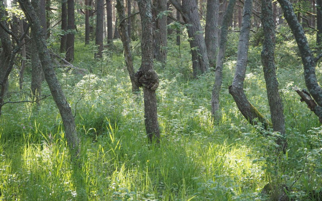 Örö saaren eteläosan metsää