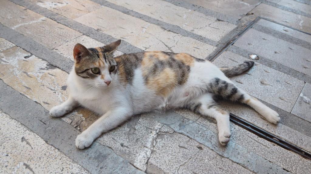 Kissa Alcudia