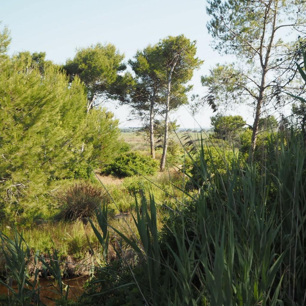 L'Albuferan luonnonpuisto