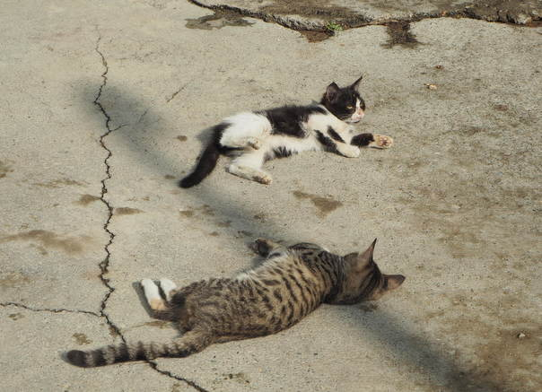 Kissoja Persiassa