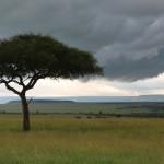 Afrikka!