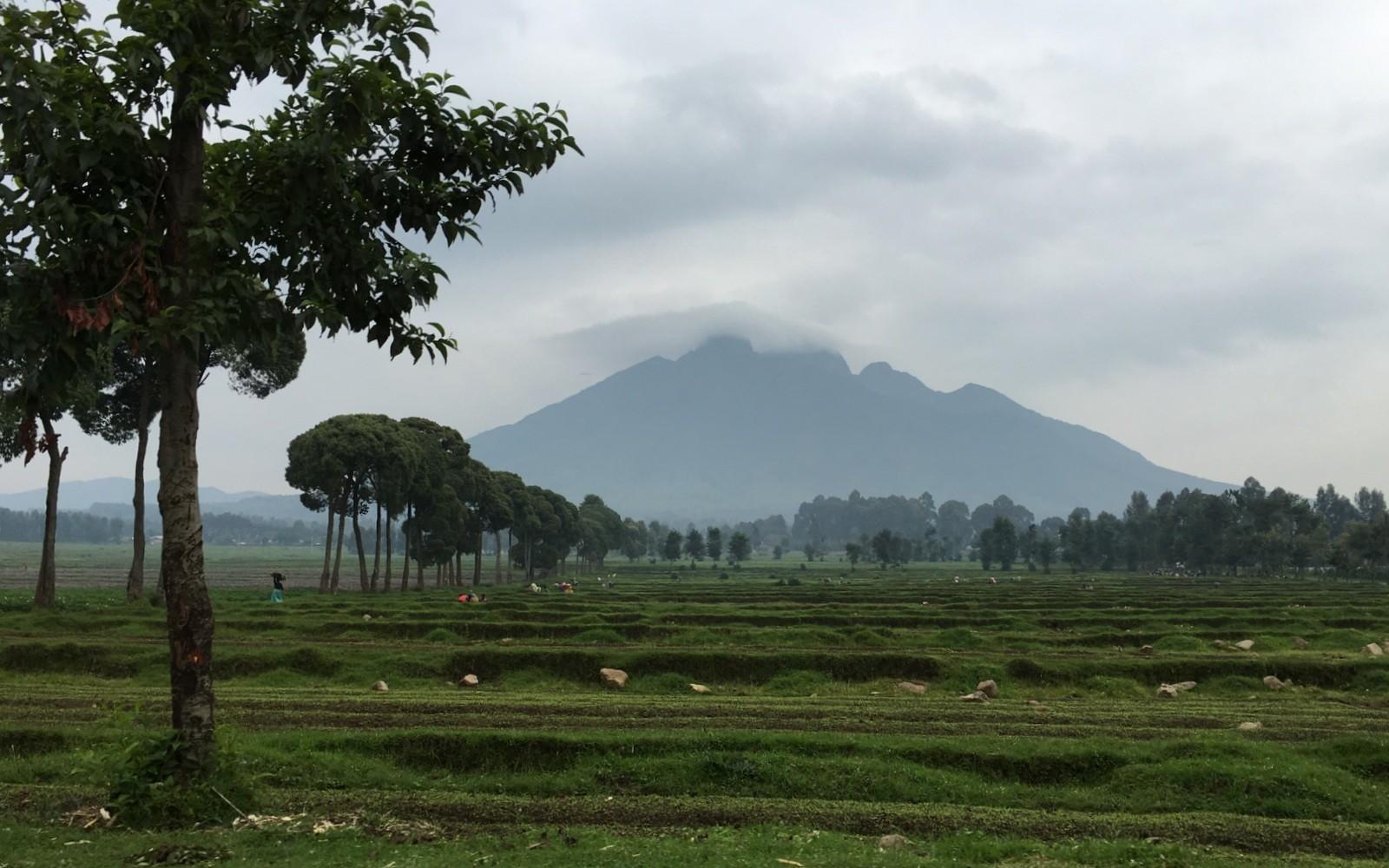 Rwanda Gorilla Mountain