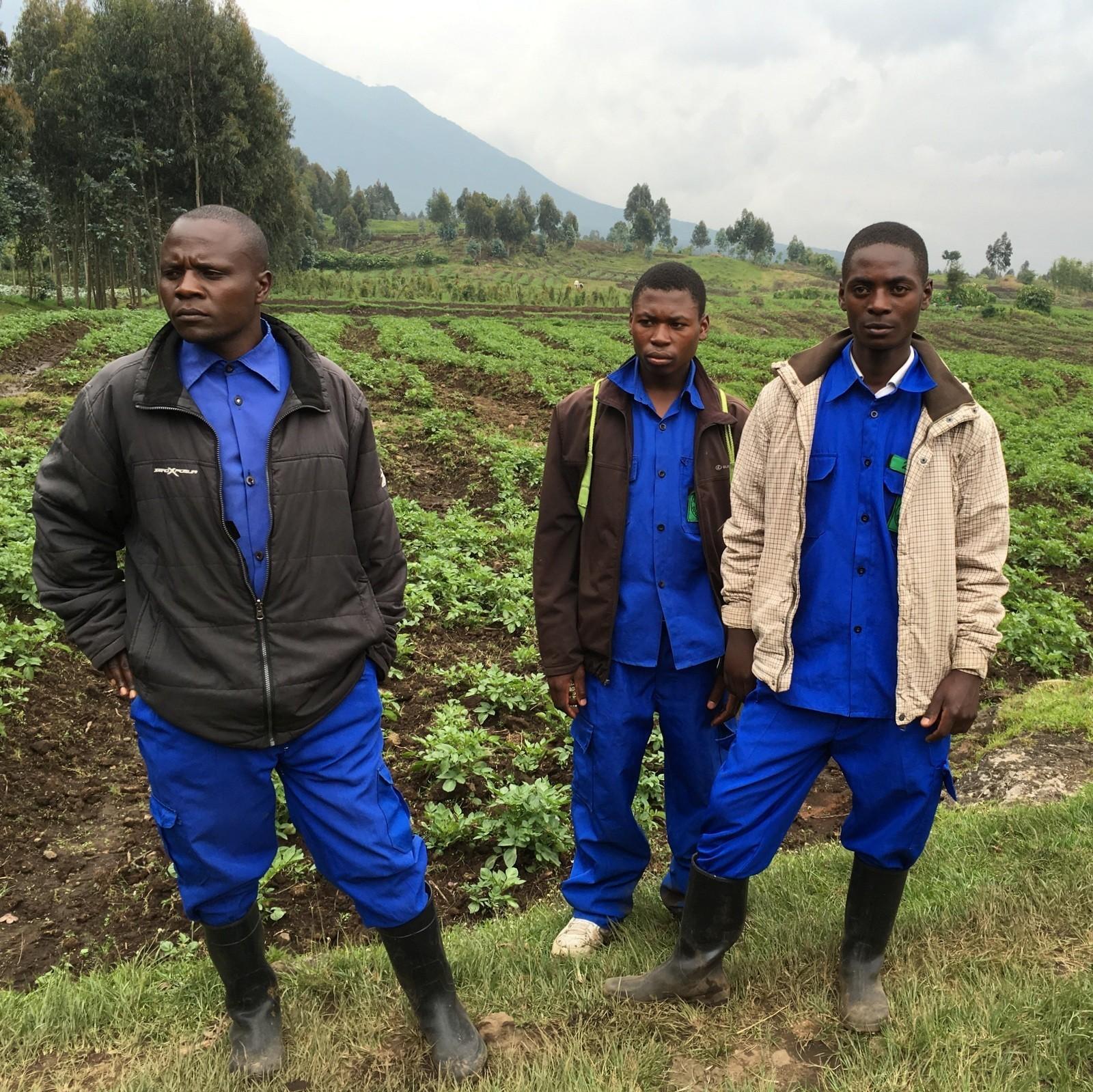 Rwanda mountain gorillas porters