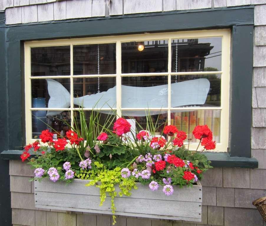 Kukkia ja harmaata Nantucket
