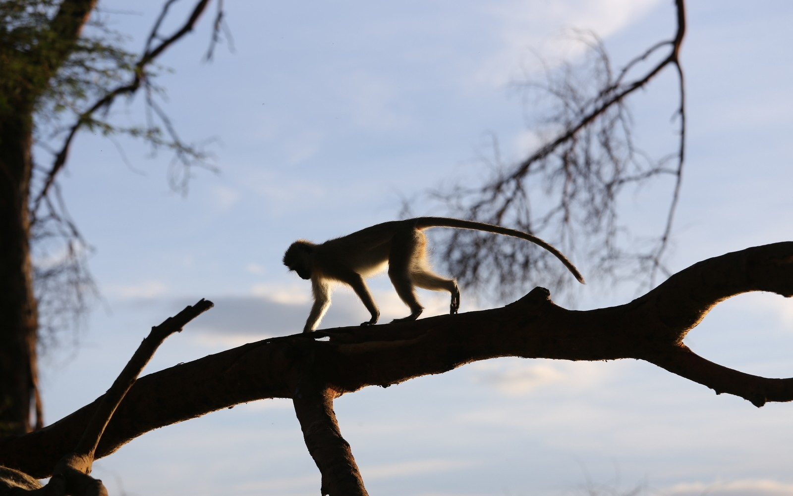 Vihermarakatti Nakuru Kenia