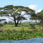 Naivasha – kylä Afrikassa
