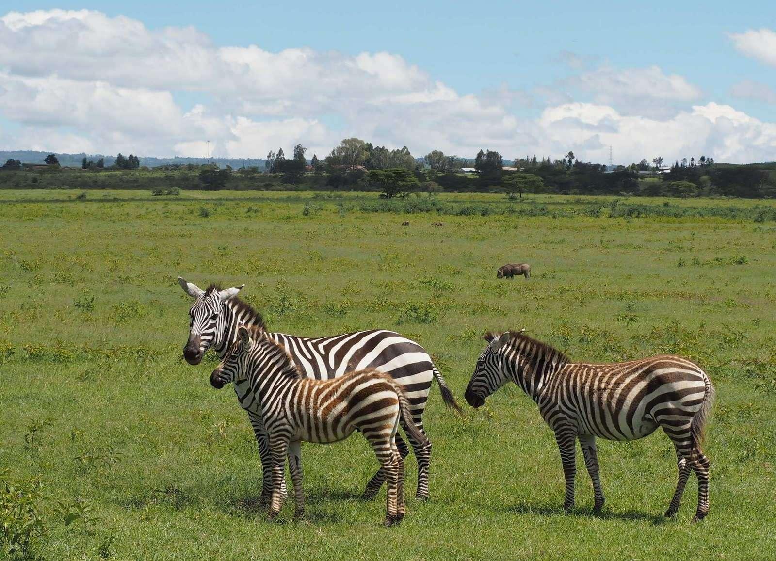 Seepra Nakuru Kenia