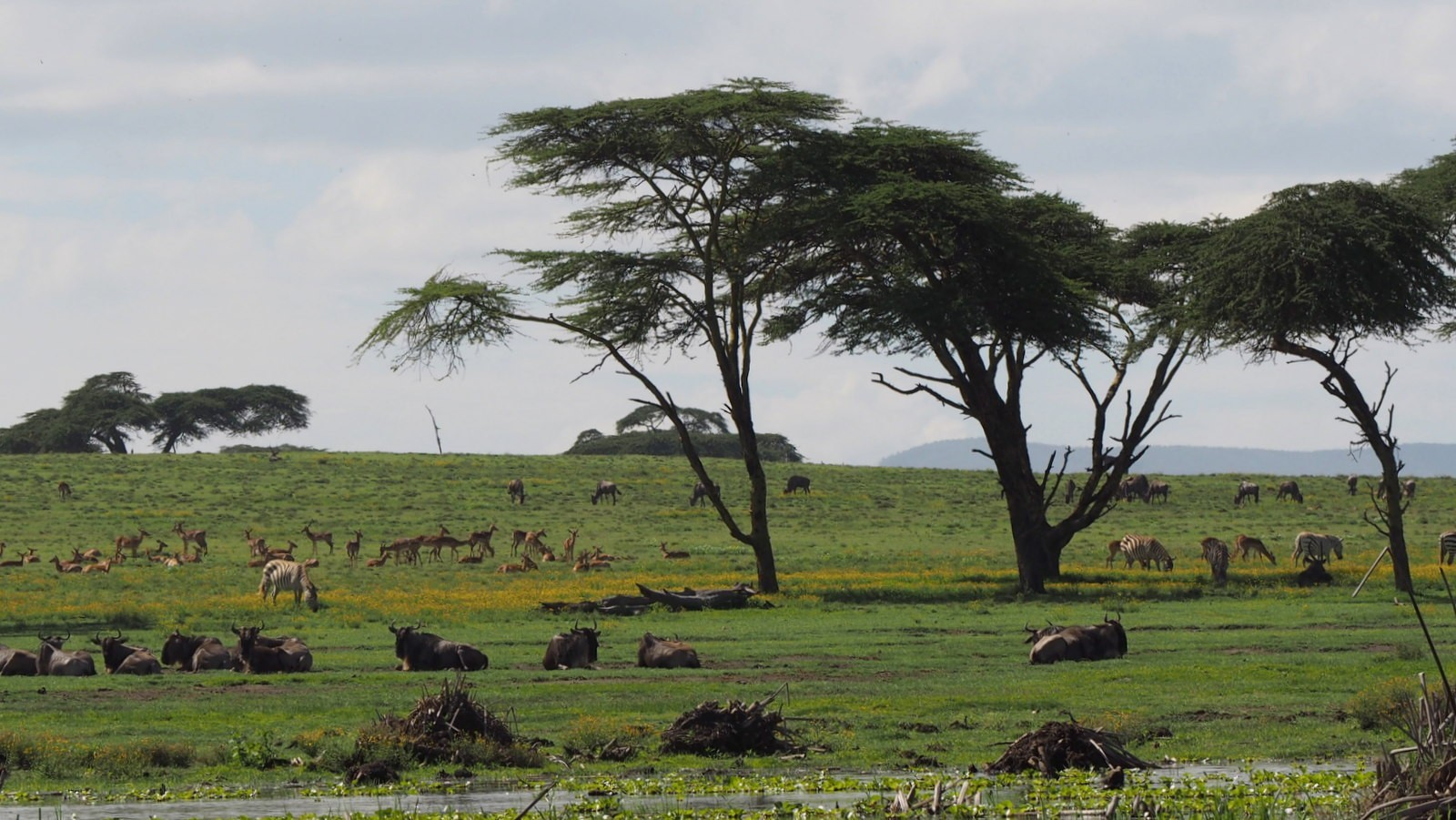 Crescent Naivasha
