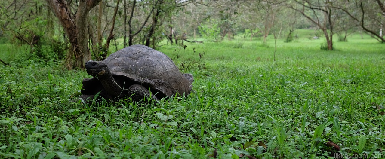 Jättiläiskilpikonna