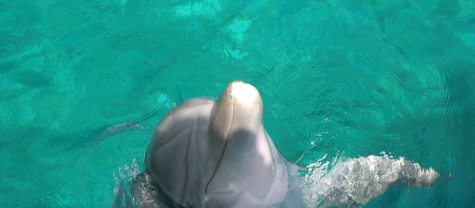 Delfiini Barcelona