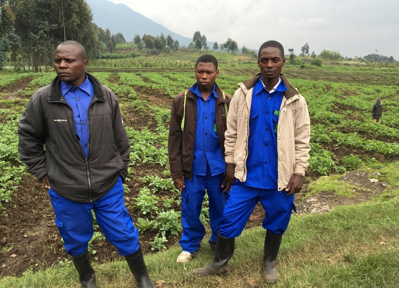 Ruanda kantajat gorillavuorelle