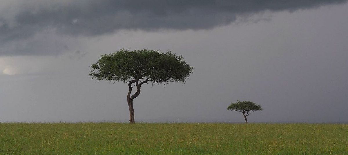 Masai Mara maisemat feature