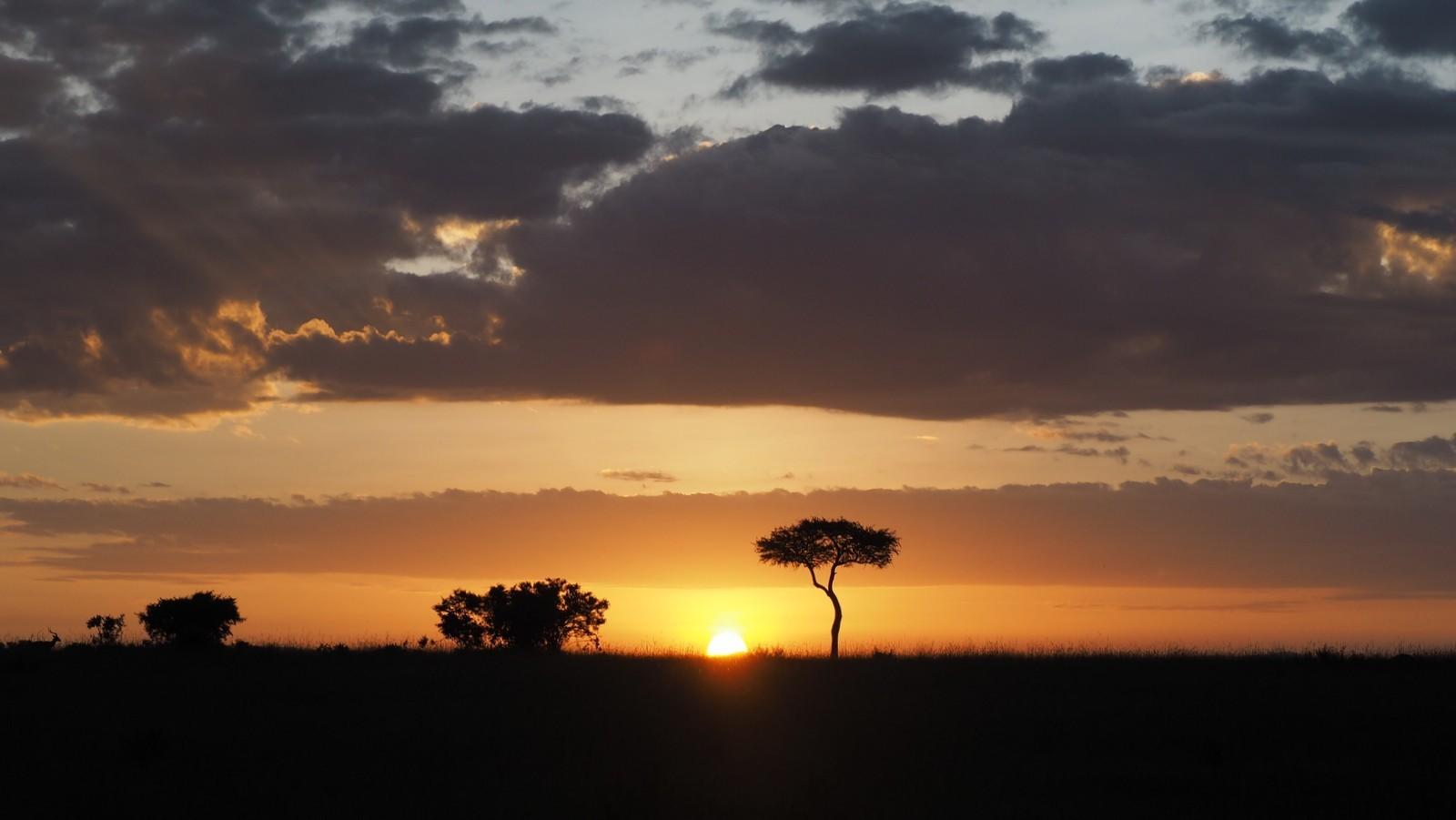 Masai Mara savannia