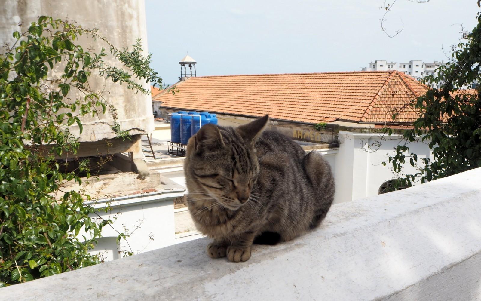 Algiers casbah cat