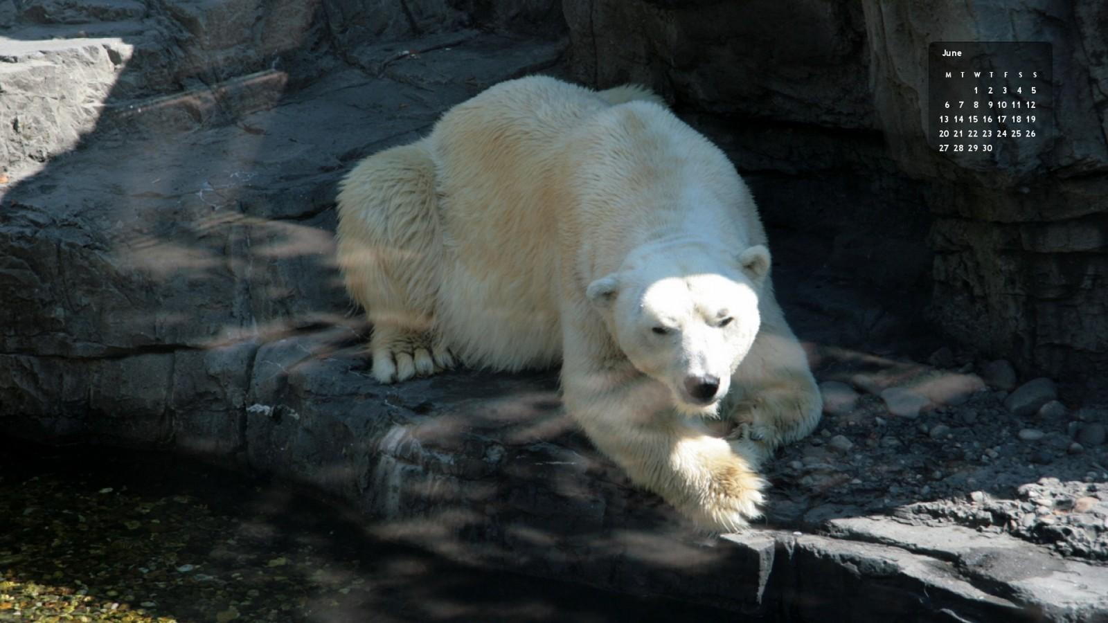 New York Zoo jääkarhu Gus 2012
