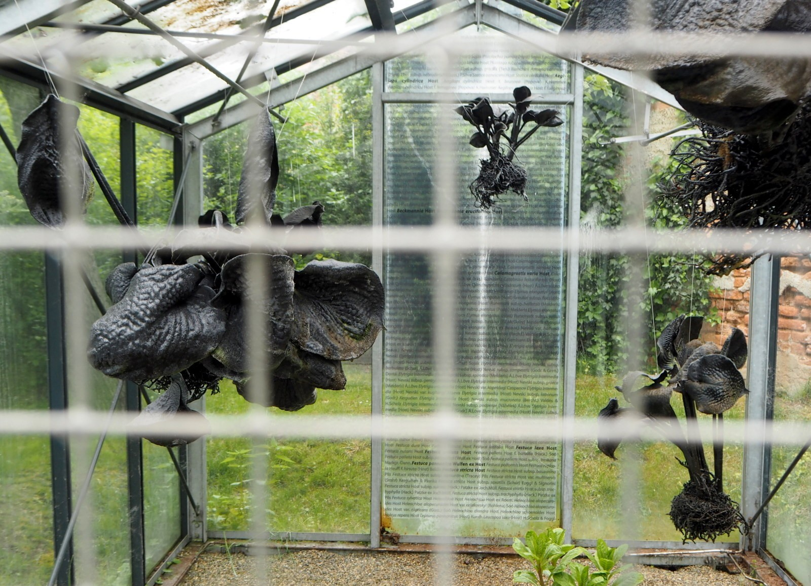 Belvedere Botanic Garden