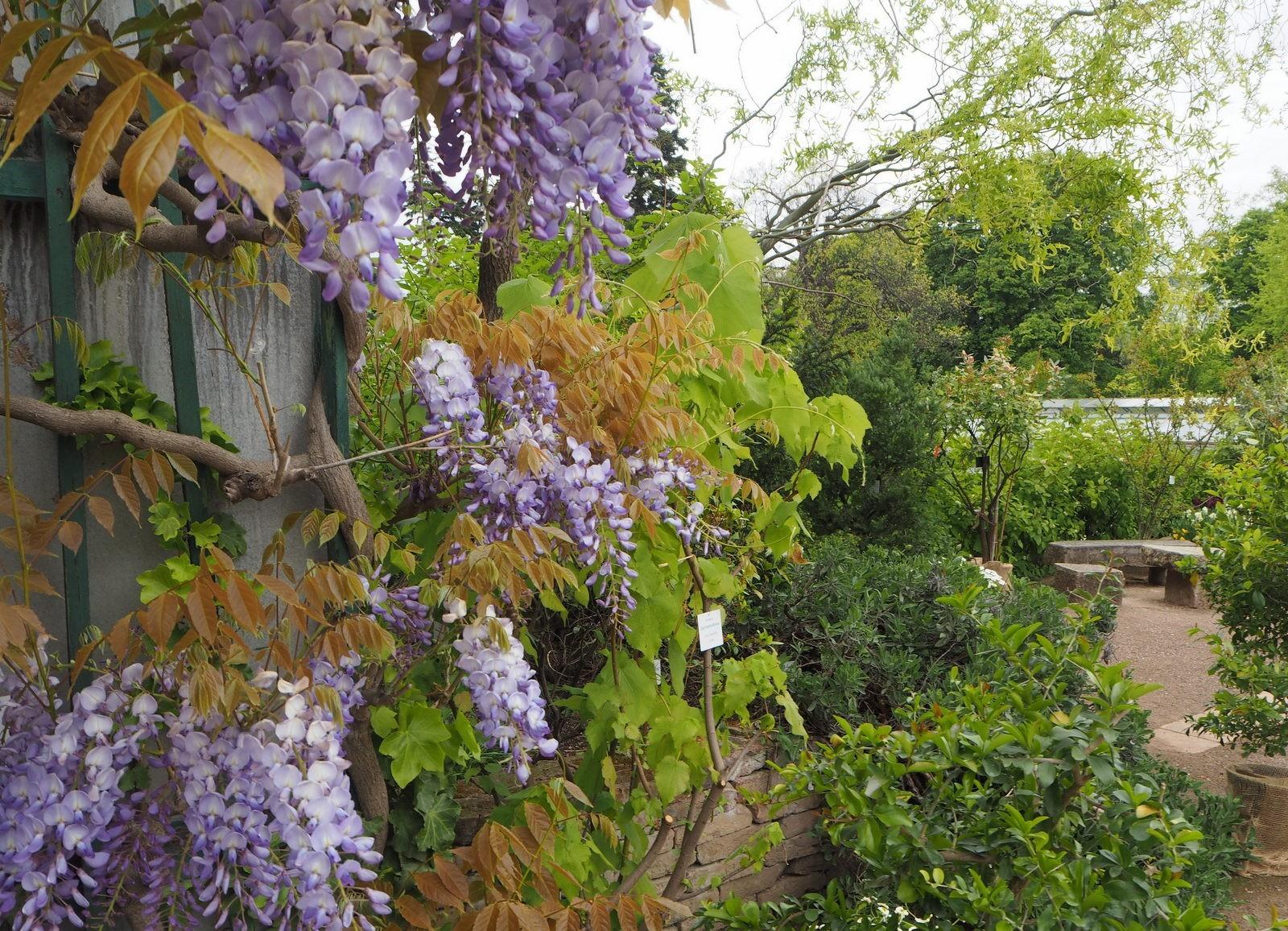 Belvedere kasvitieteellinen puutarha