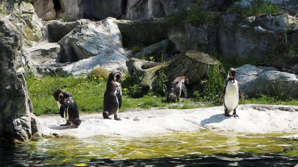 Humboldtin pingviinit Wien