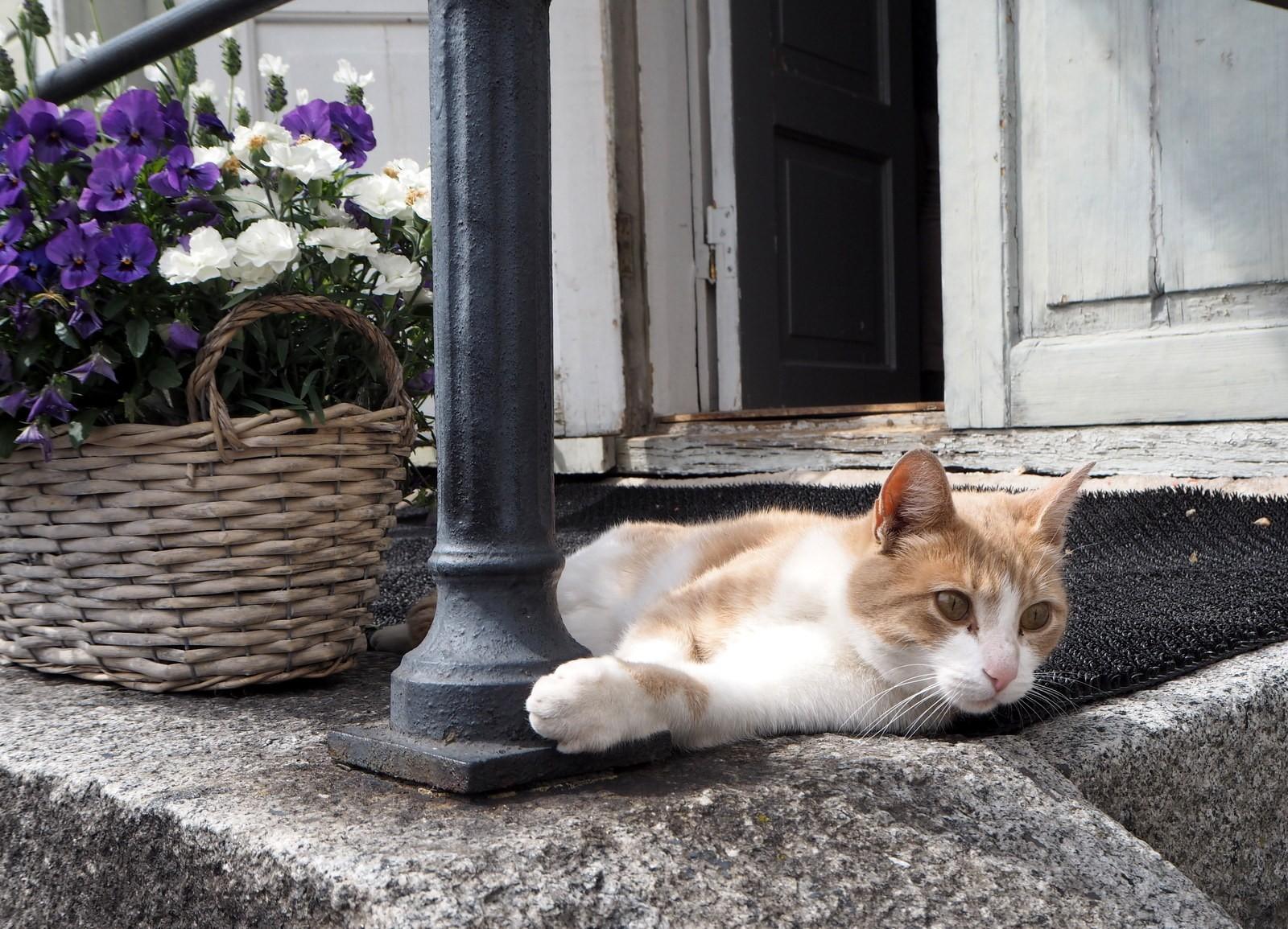 Kissa Porvoo