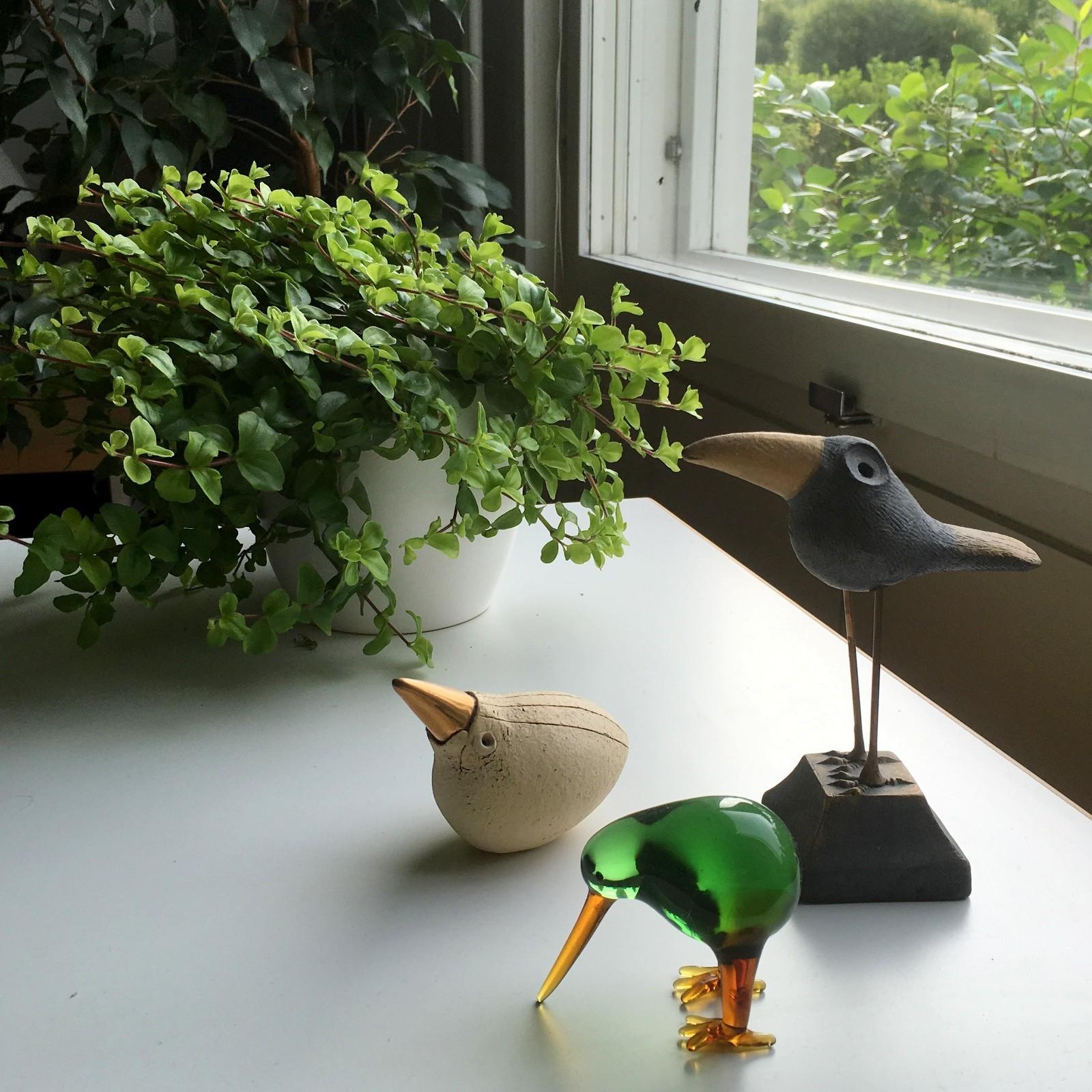 Pieni osa lintukokoelmaamme