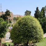 Syyskuun kuva – Shiraz, Iran