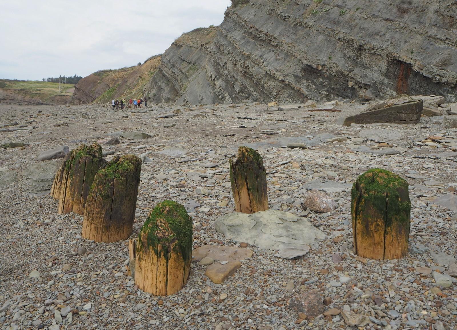 Joggins Fossil Cliff Nova Scotia