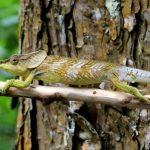 Retkiä Madagaskarilla: Antsiranana ja Tamatave