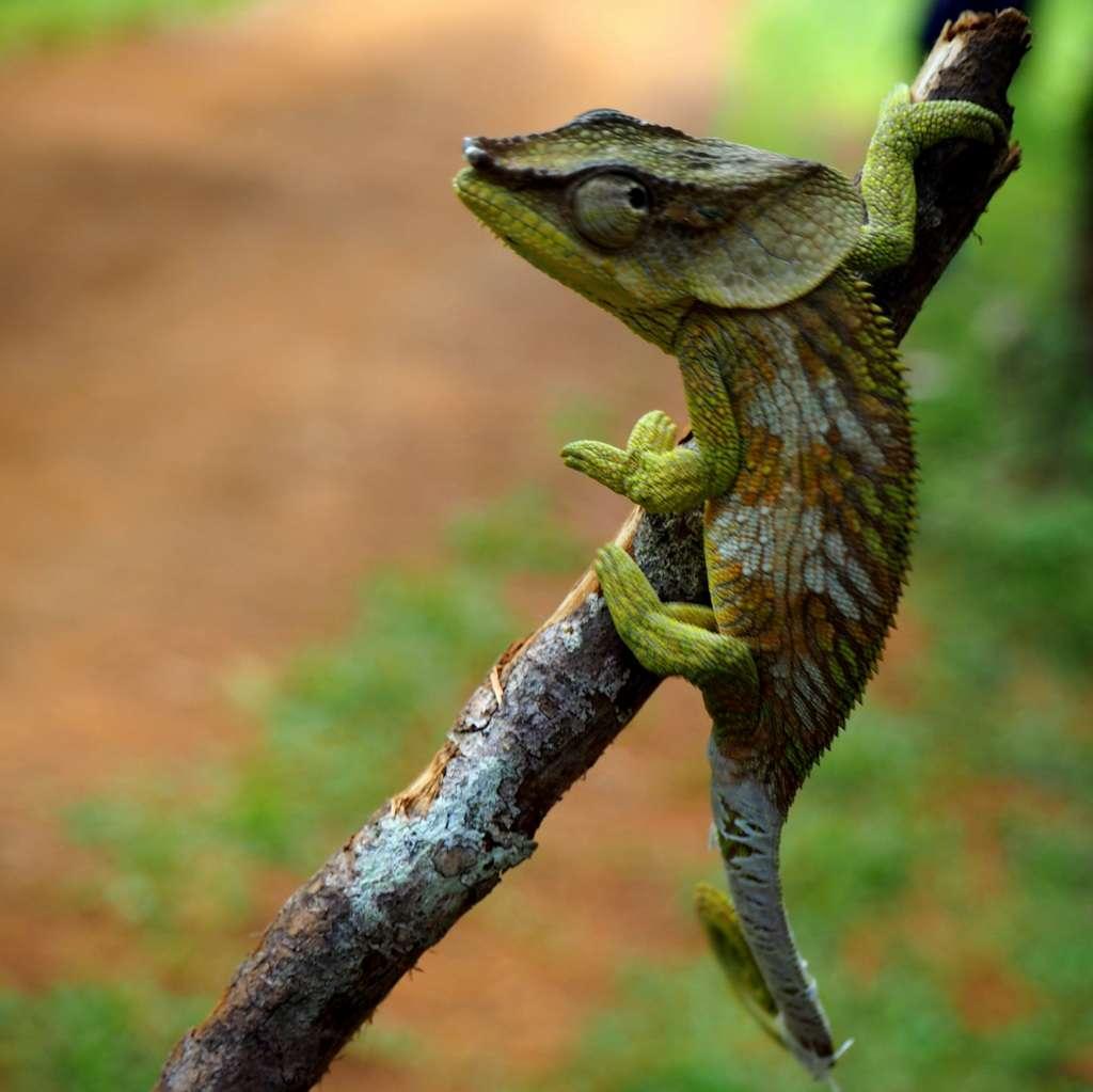 Madagaskar Antsarinana