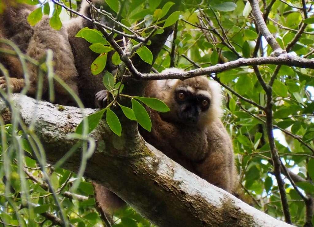 Madagaskar Antsiranana