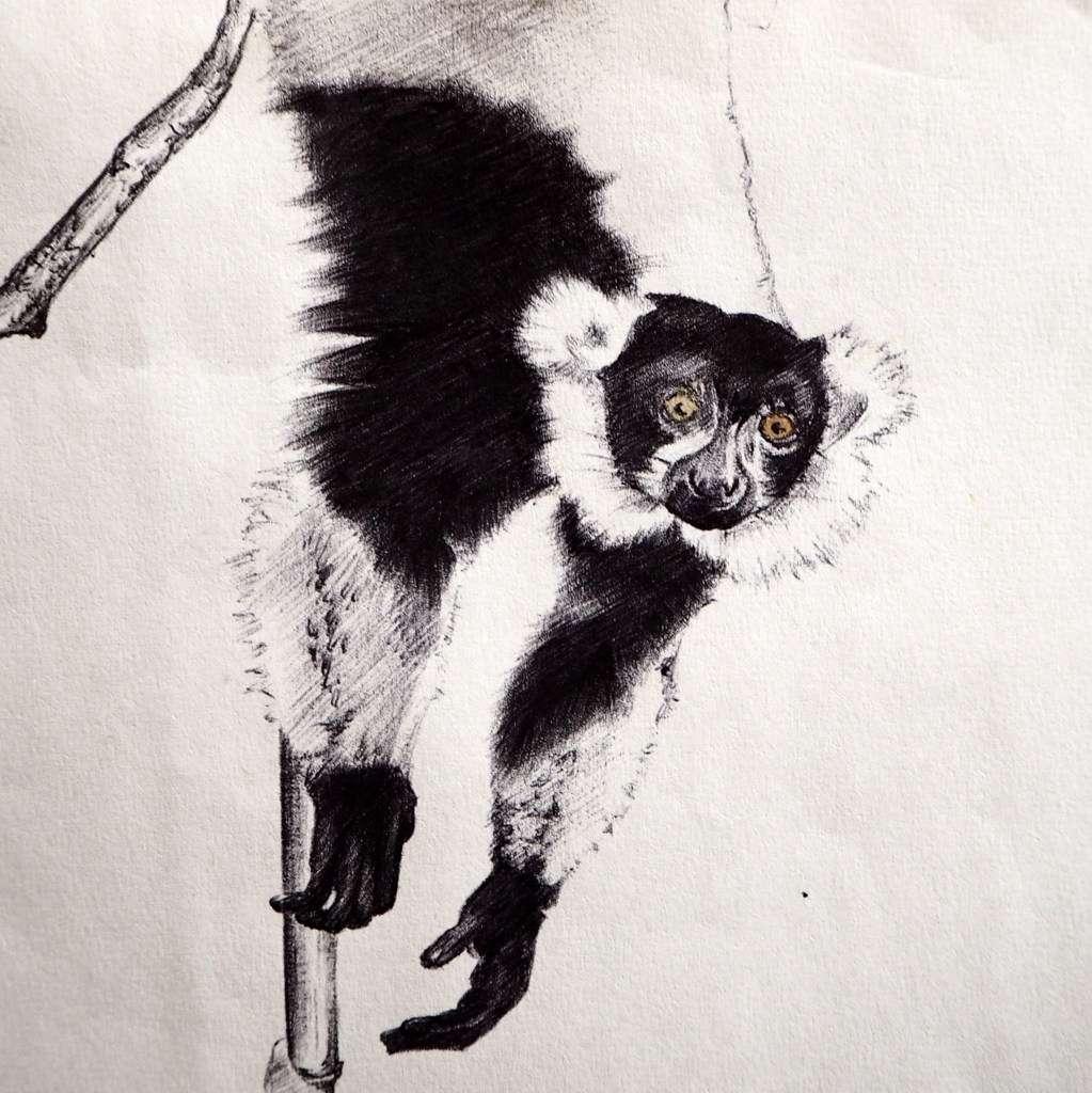 Madagaskar Tamatave