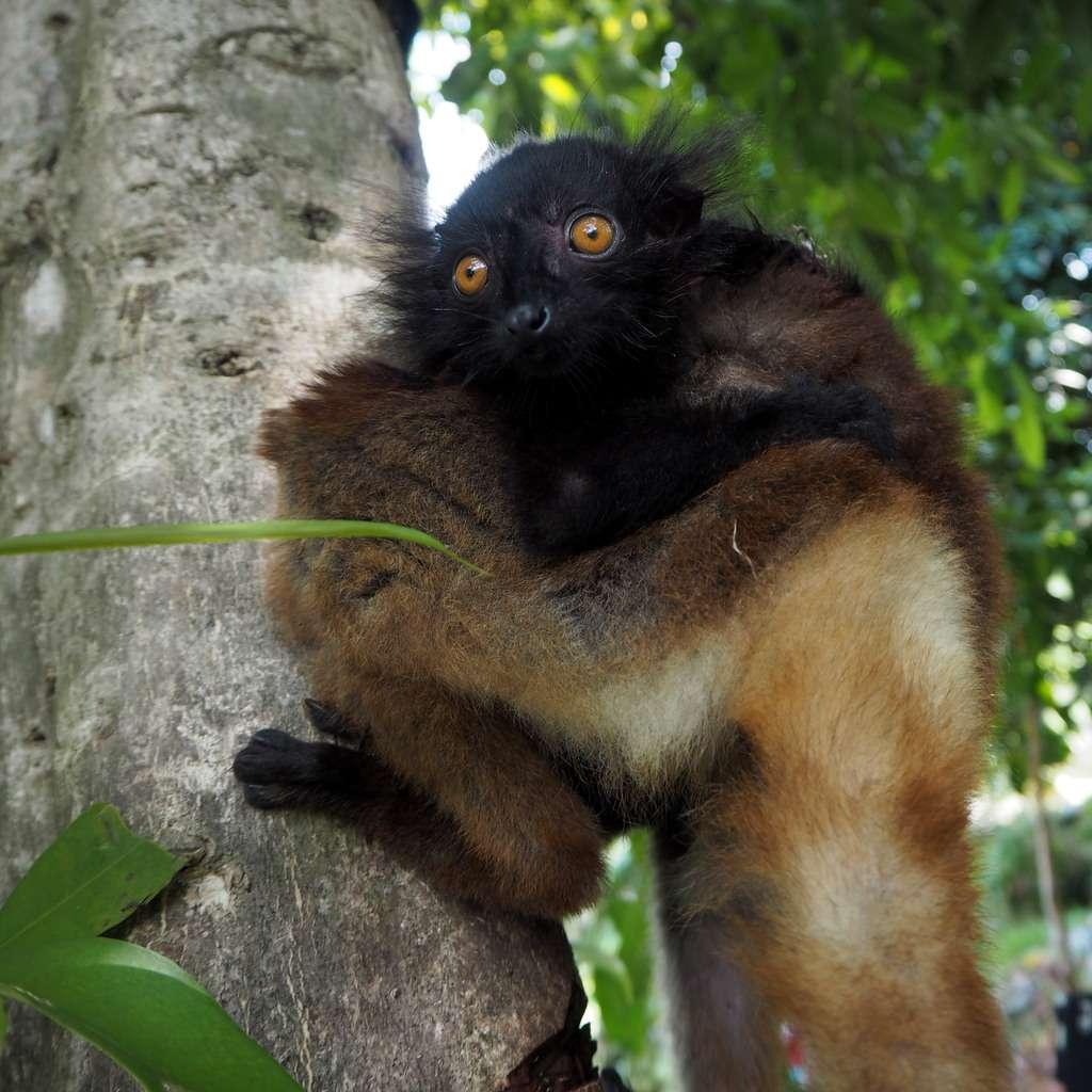 Nosy Be Madagaskar