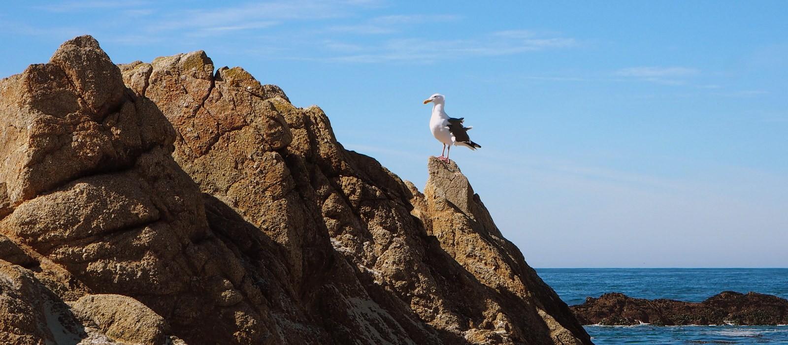 Monterey feature