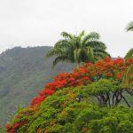 Saint-Denis, Reunion