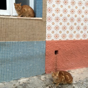 Tavira cat