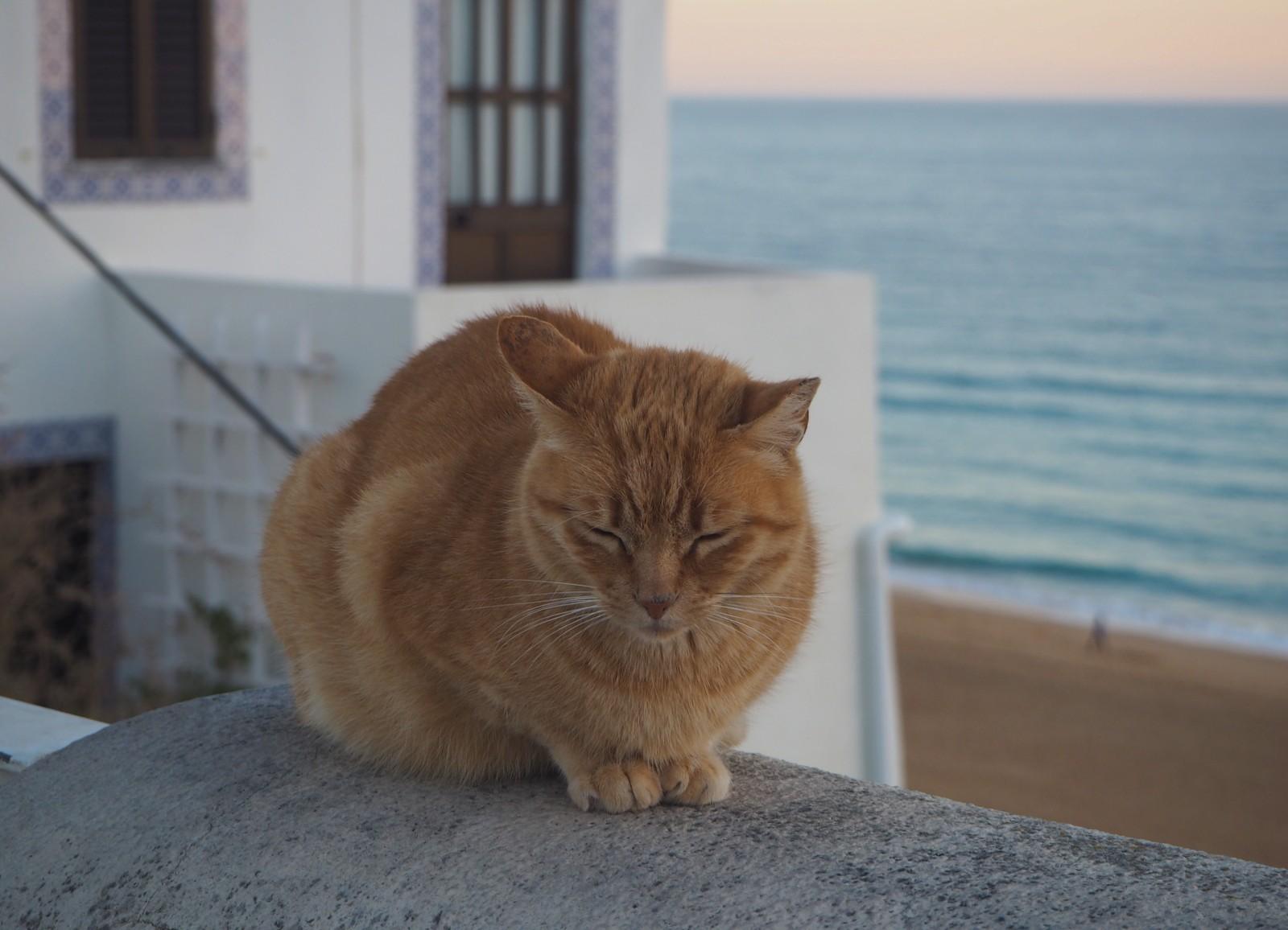 Albufeira kissa